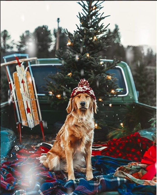 christmas inspiration instagram